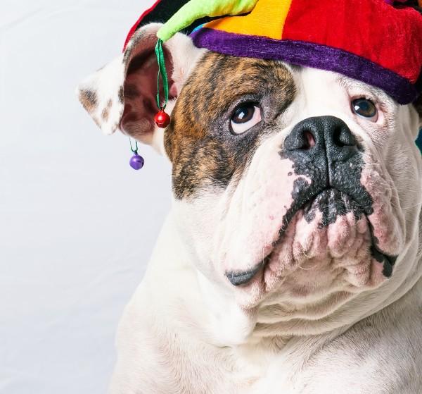 beautiful dog in a funny cap